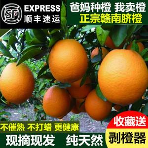 橙子赣南脐橙10斤包邮当季新鲜水果批发正宗江西赣州特产现摘现发橙子新鲜