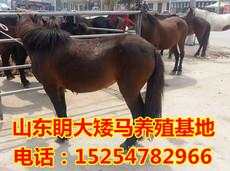Аксессуары Маленький пони животные лошади ТАТ
