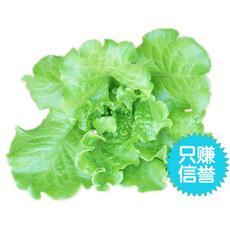 水耕 水培菜 无农药 新鲜蔬菜 生菜 沙拉菜