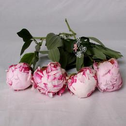 家庭插花 荷兰进口芍药 新鲜牡丹芍药切花一朵 北京鲜花速递