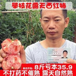 攀枝花现摘新鲜水果纯天然自然熟西红柿番茄孕妇儿童8斤装包邮
