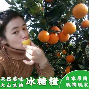 正宗麻阳冰糖橙当季橙子新鲜水果10斤包邮超甜现摘现发非赣南脐橙脐橙水果
