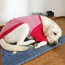 Large dog clothes golden hair Labrador, Alaska autumn winter pet's medium-sized large dog autumn winter clothes