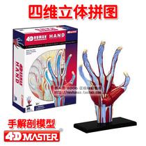 ���4D master ���w�ֲ�����ģ�� �ľS���wƴ�D �t���������ǽ���