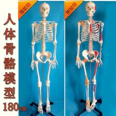 Children's toy XING Tao medical 170cm